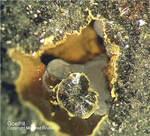 Mineralien Bayern Hagendorf Süd Goethit