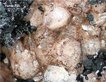 Mineralien Bayern Hagendorf Süd Hureaulith