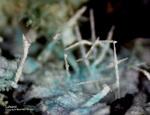 Harz Mineralien Juliushütte Astfeld Latiumit