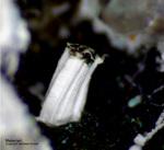 Harz Mineralien Frau Sophienhütte Langelsheim Melanterit