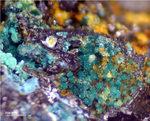 Mineralien Mansfelder Revier Oberhütte Eisleben Atacamit
