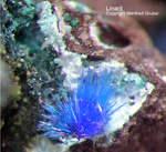Mineralien Mansfelder Revier Oberhütte Eisleben Linarit